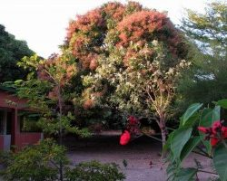 kairoh_garden