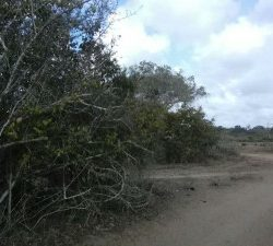 Plots for sale Kenya Malindi