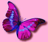 papillon-ombre-trans