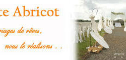 Carte Abricot