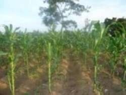 Abuja farmland for sale 2