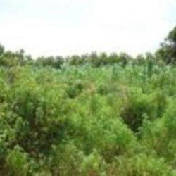 Abuja farmland for sale