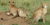 chetah entugga safaris
