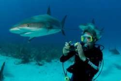 Stuart-Cove-Shark-Diving-Photography-Bahamas-4