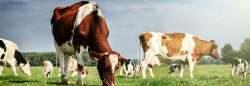 Livestock-Instruments
