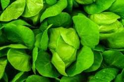 benefits of eating healthy and green vegetables